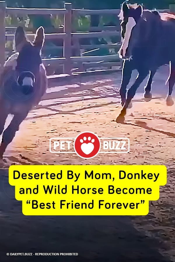 "Deserted By Mom, Donkey and Wild Horse Become ""Best Friend Forever"""