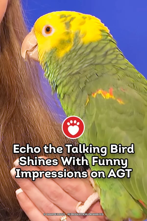 Echo the Talking Bird Shines With Funny Impressions on AGT
