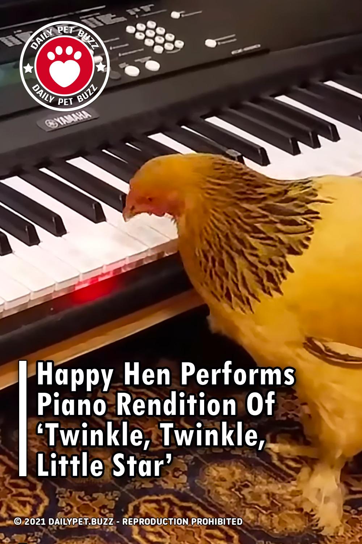 Happy Hen Performs Piano Rendition Of 'Twinkle, Twinkle, Little Star'