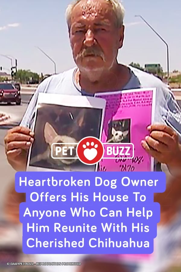 Heartbroken Dog Owner Offers His House To Anyone Who Can Help Him Reunite With His Cherished Chihuahua