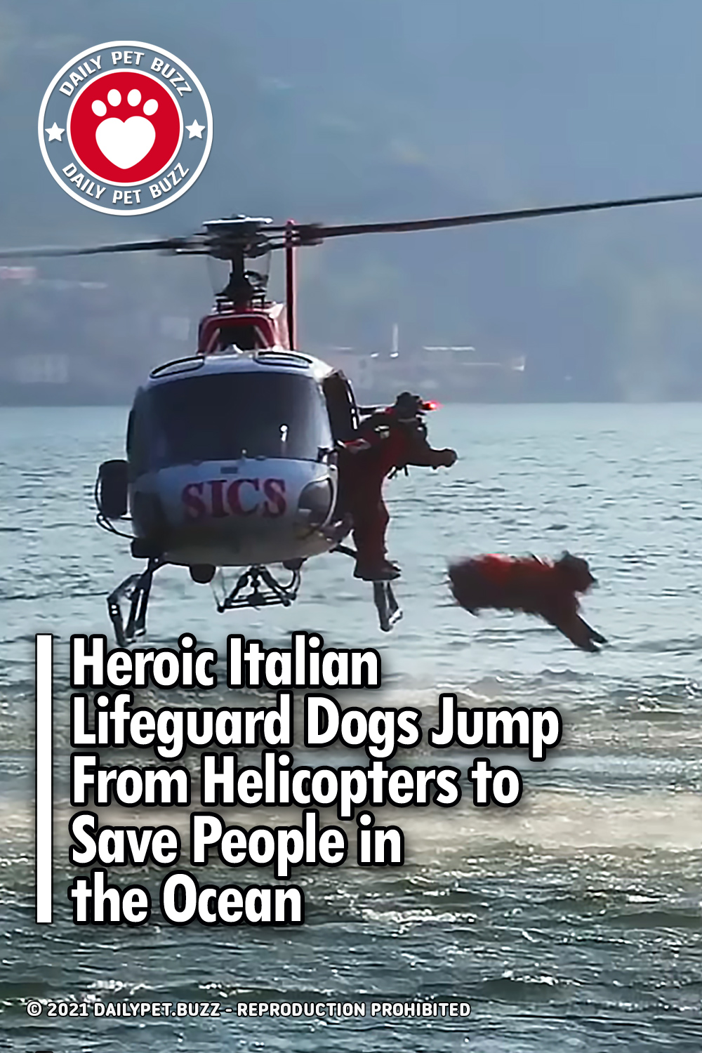 Heroic Italian Lifeguard Dogs Jump From Helicopters to Save People in the Ocean