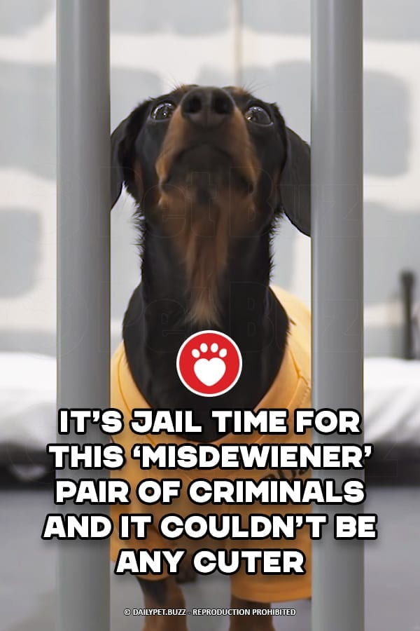 It's Jail Time For This 'Misdewiener' Pair Of Criminals And It Couldn't Be Any Cuter