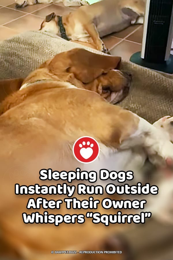 """Sleeping Dogs Instantly Run Outside After Their Owner Whispers """"Squirrel"""""""