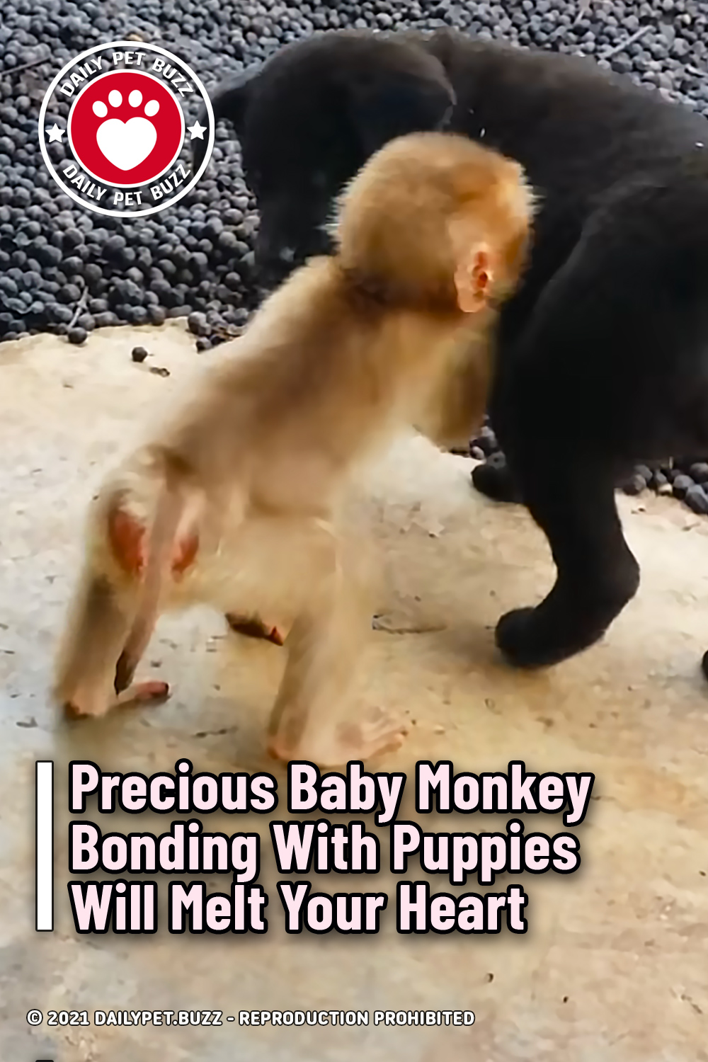 Precious Baby Monkey Bonding With Puppies Will Melt Your Heart