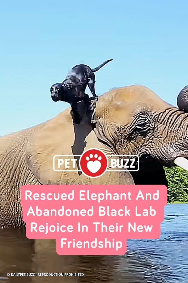 Rescued Elephant And Abandoned Black Lab Rejoice In Their New Friendship