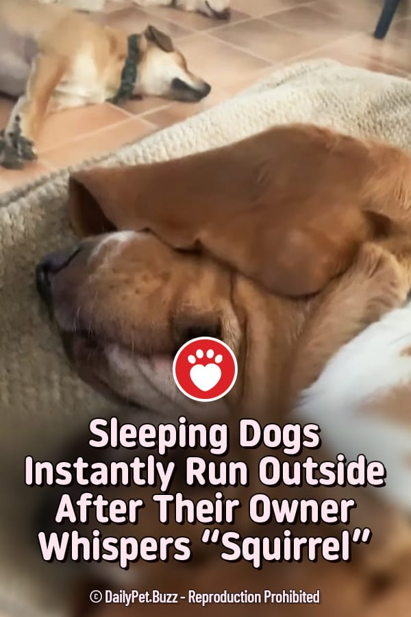 "Sleeping Dogs Instantly Run Outside After Their Owner Whispers ""Squirrel"""