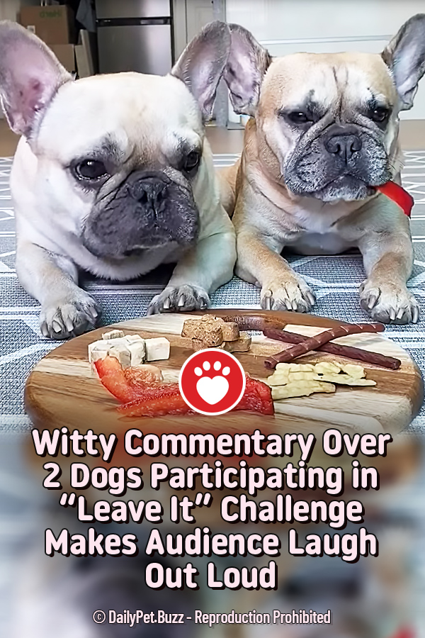 "Witty Commentary Over 2 Dogs Participating in ""Leave It"" Challenge Makes Audience Laugh Out Loud"