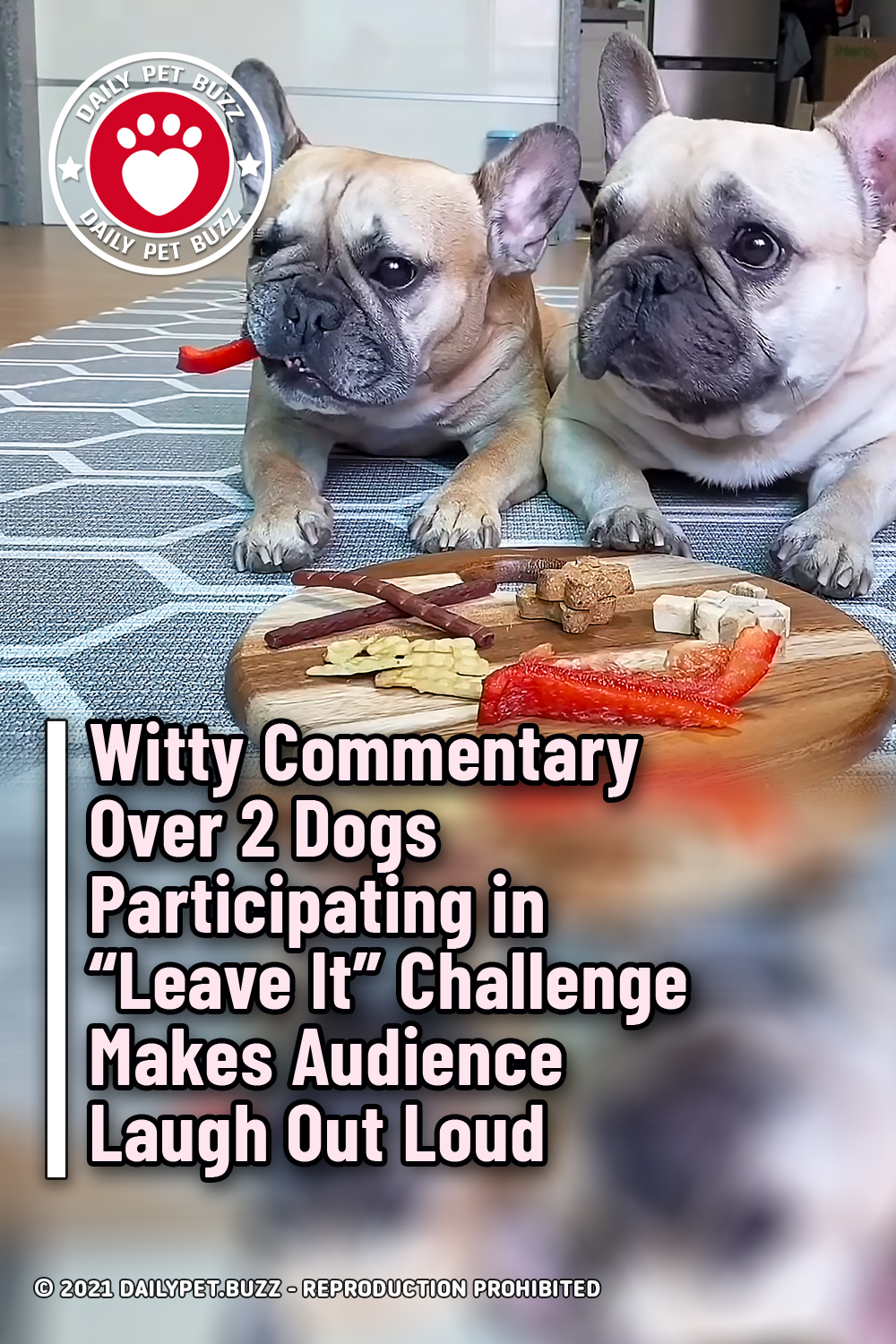 """Witty Commentary Over 2 Dogs Participating in """"Leave It"""" Challenge Makes Audience Laugh Out Loud"""