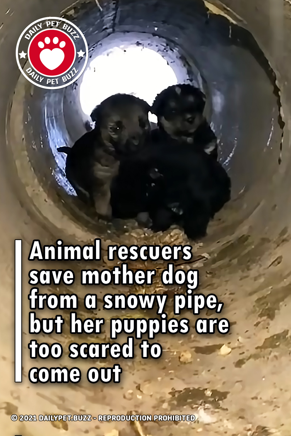 Animal rescuers save mother dog from a snowy pipe, but her puppies are too scared to come out