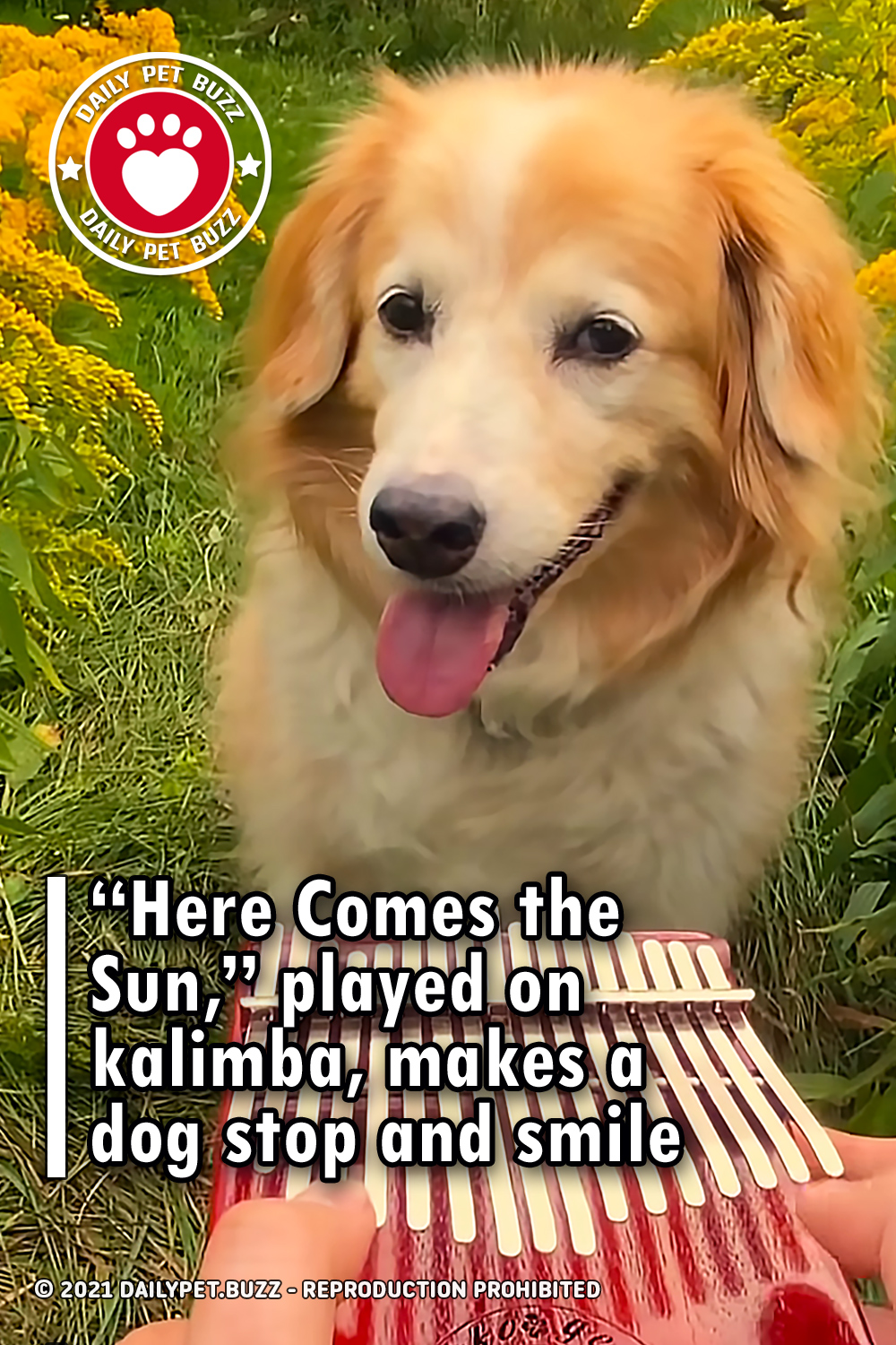 """Here Comes the Sun,"" played on kalimba, makes a dog stop and smile"
