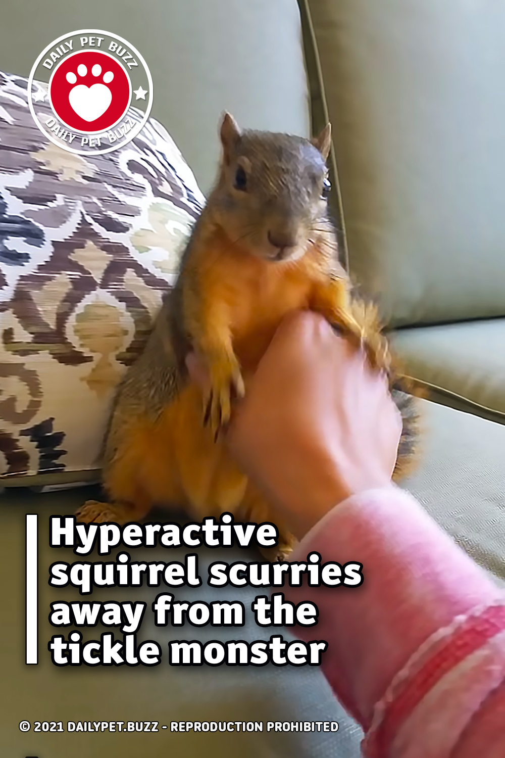 Hyperactive squirrel scurries away from the tickle monster