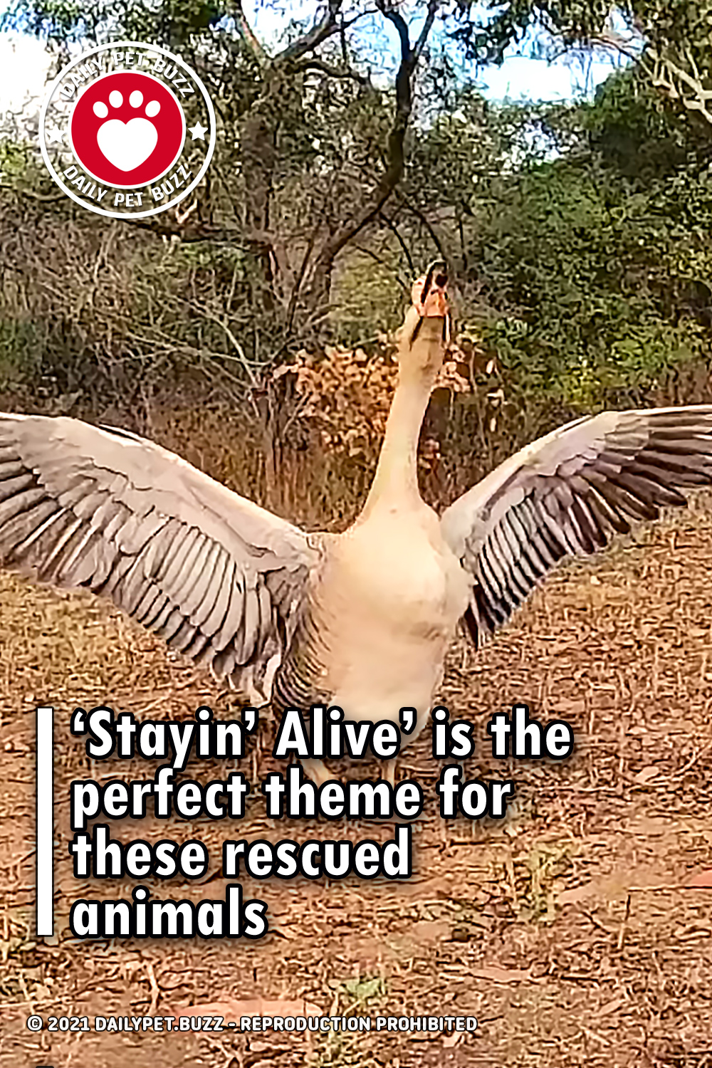 'Stayin' Alive' is the perfect theme for these rescued animals