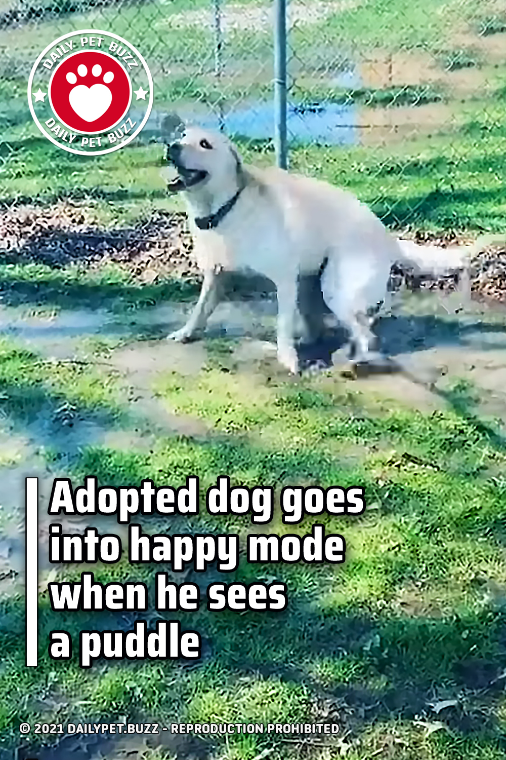 Adopted dog goes into happy mode when he sees a puddle