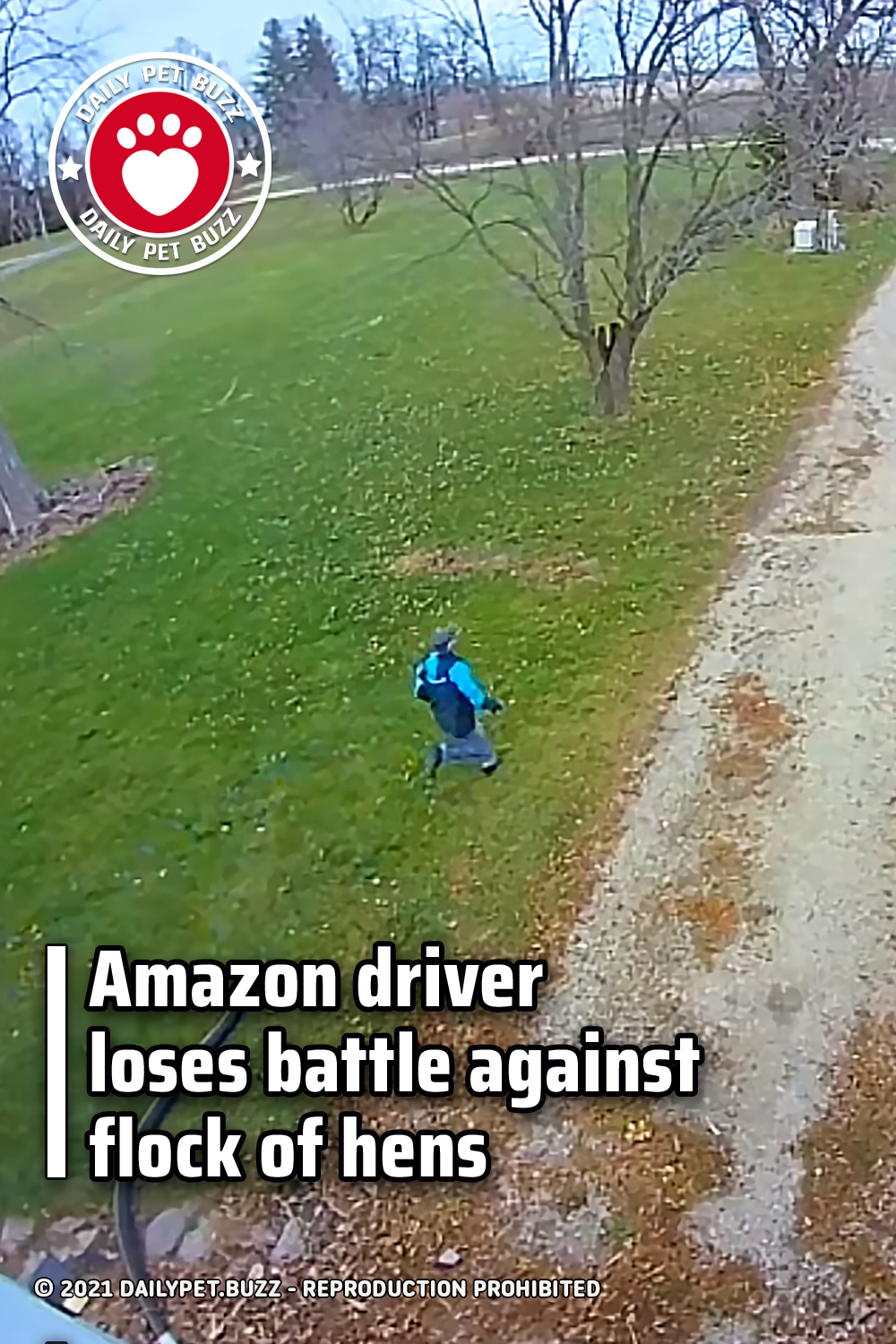 Amazon driver loses battle against flock of hens
