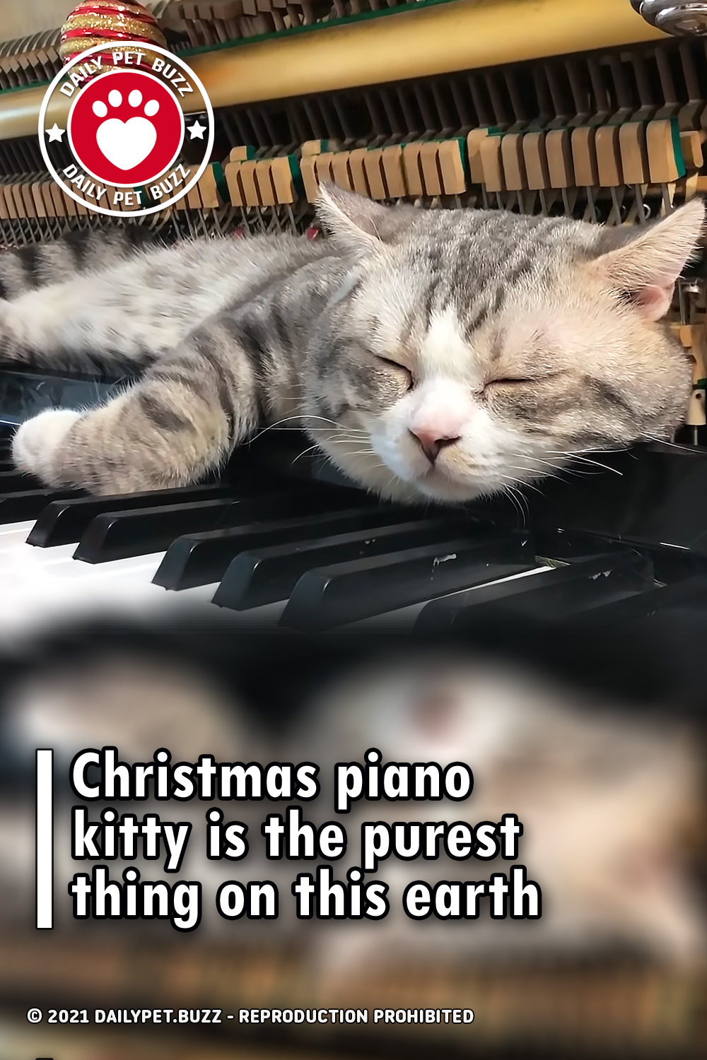 Christmas piano kitty is the purest thing on this earth