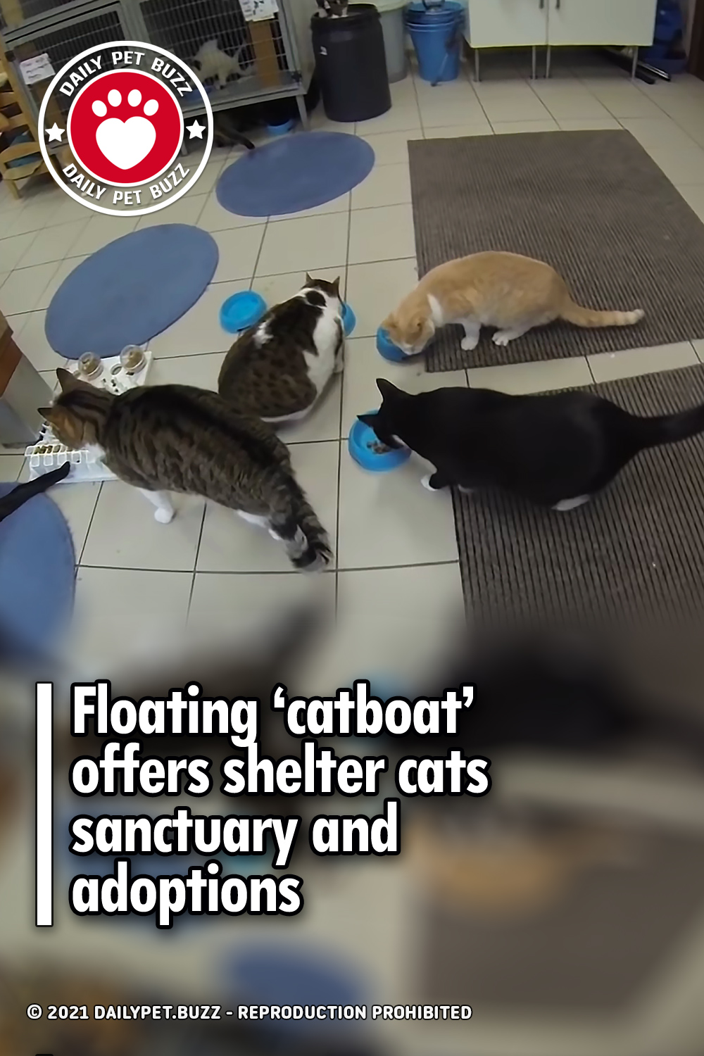 Floating 'catboat' offers shelter cats sanctuary and adoptions