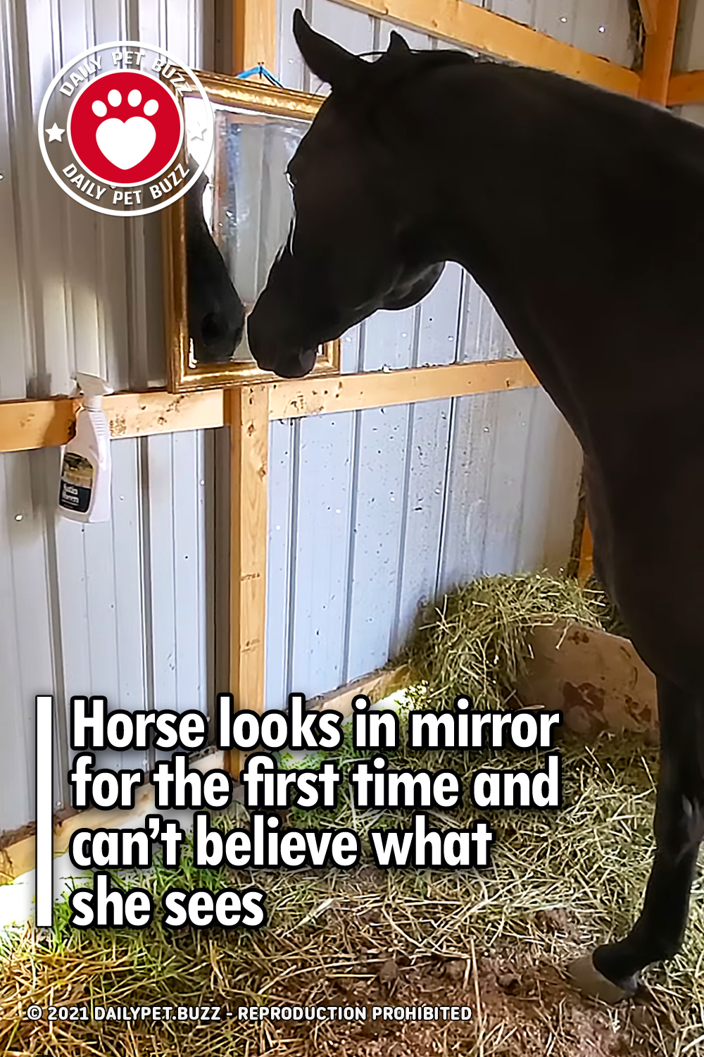Horse looks in mirror for the first time and can't believe what she sees