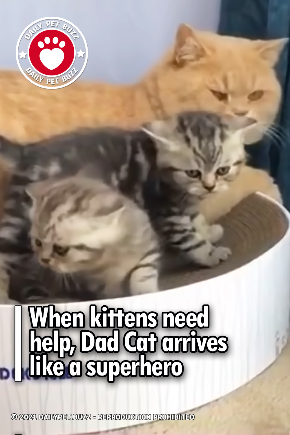When kittens need help, Dad Cat arrives like a superhero