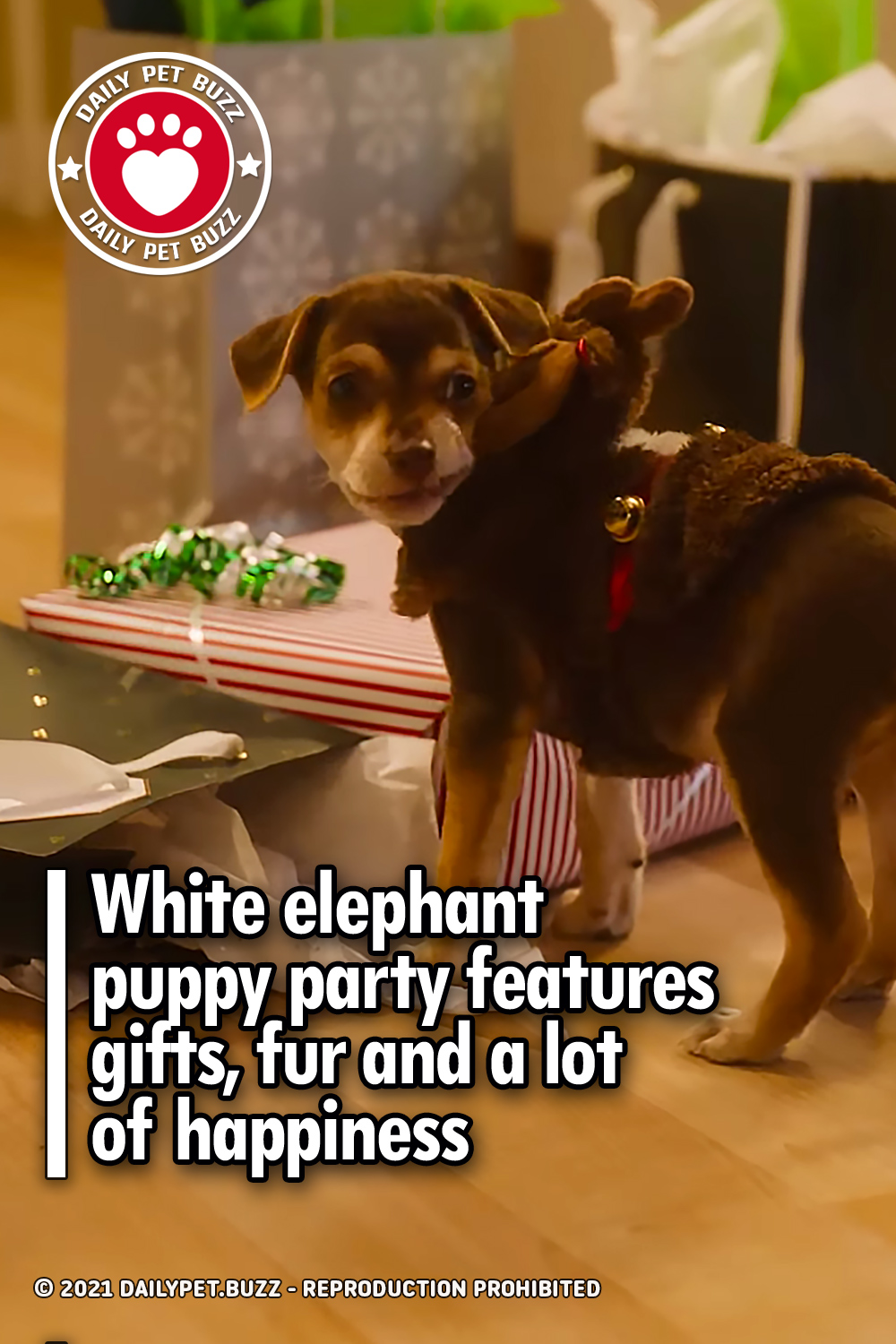White elephant puppy party features gifts, fur and a lot of happiness