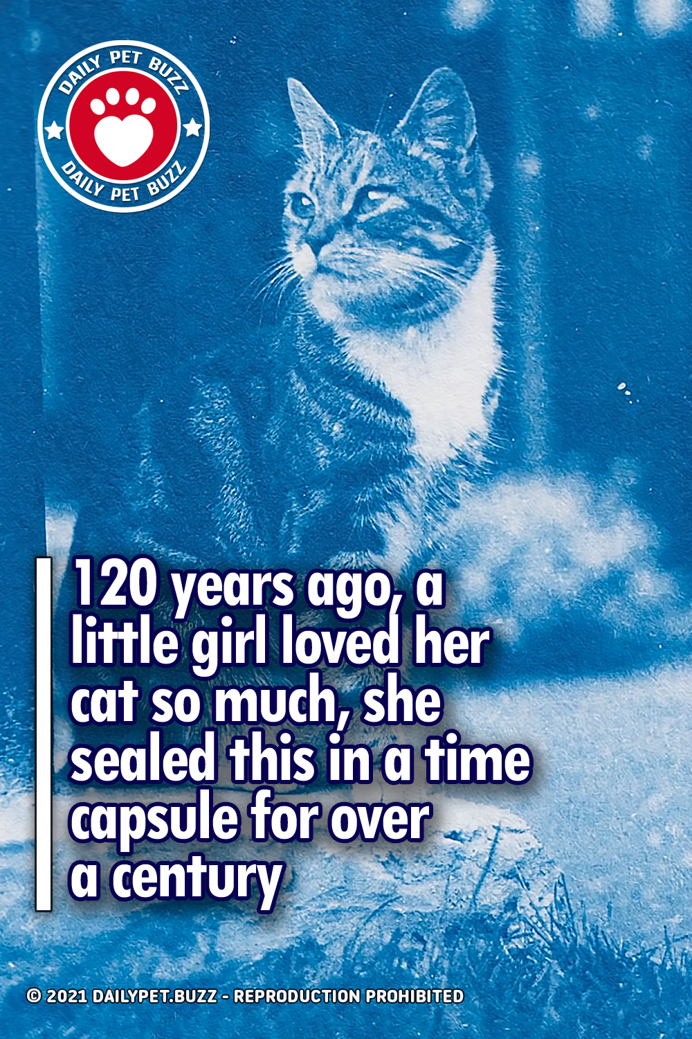 120 years ago, a little girl loved her cat so much, she sealed this in a time capsule for over a century
