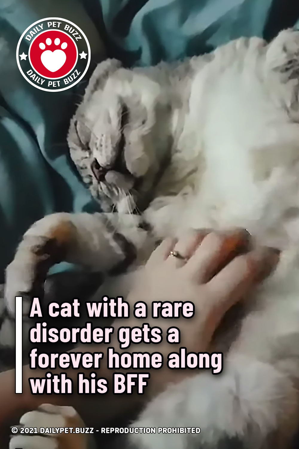 A cat with a rare disorder gets a forever home along with his BFF