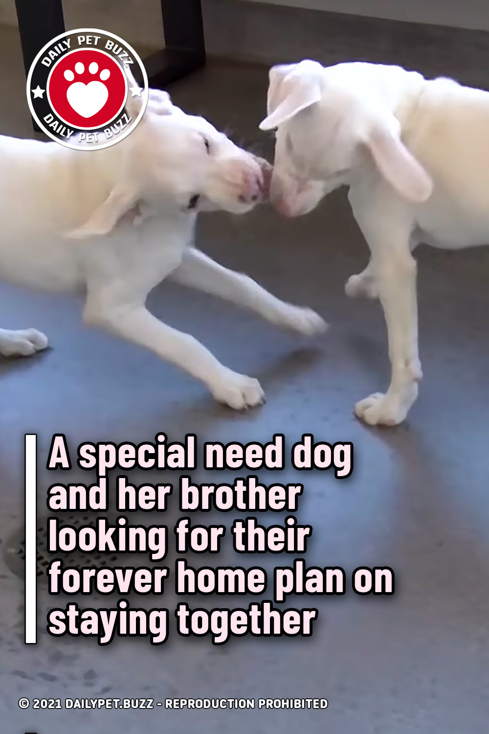 A special need dog and her brother looking for their forever home plan on staying together