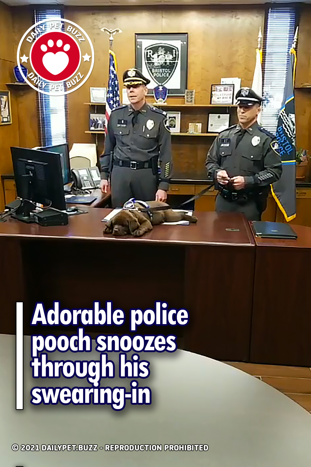 Adorable police pooch snoozes through his swearing-in