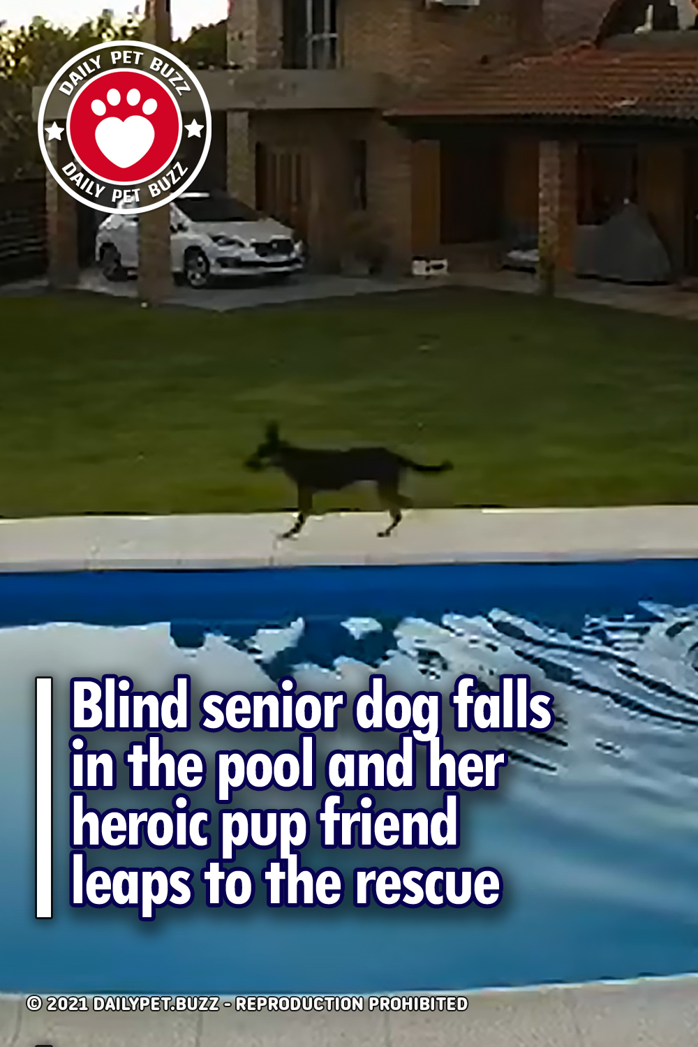 Blind senior dog falls in the pool and her heroic pup friend leaps to the rescue