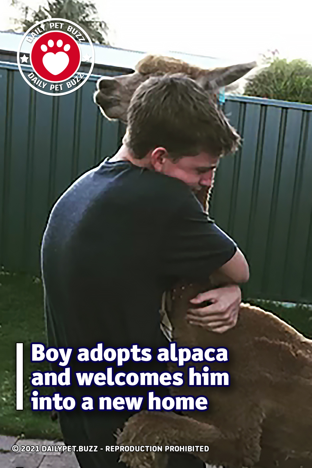 Boy adopts alpaca and welcomes him into a new home
