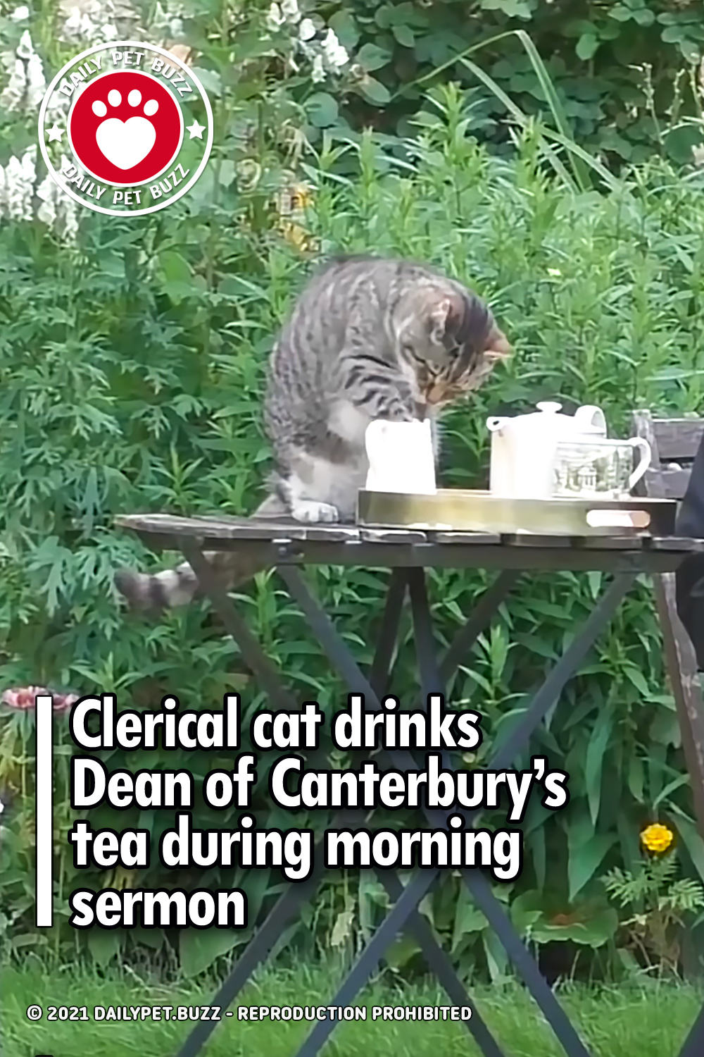 Clerical cat drinks Dean of Canterbury's tea during morning sermon