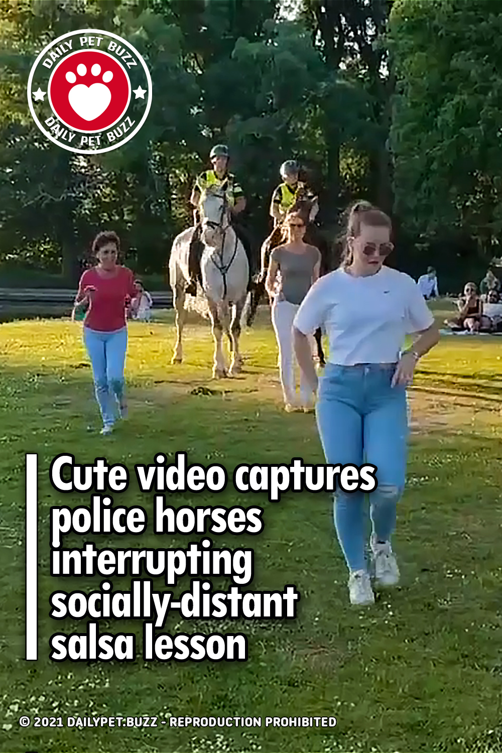 Cute video captures police horses interrupting socially-distant salsa lesson