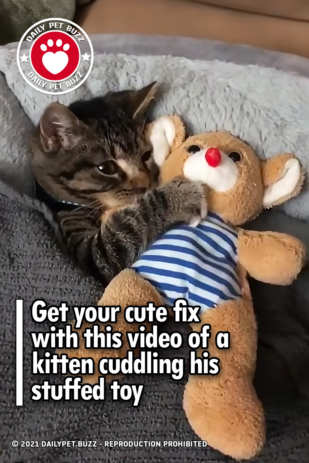 Get your cute fix with this video of a kitten cuddling his stuffed toy