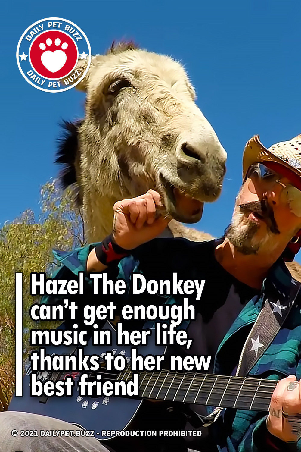 Hazel The Donkey can't get enough music in her life, thanks to her new best friend