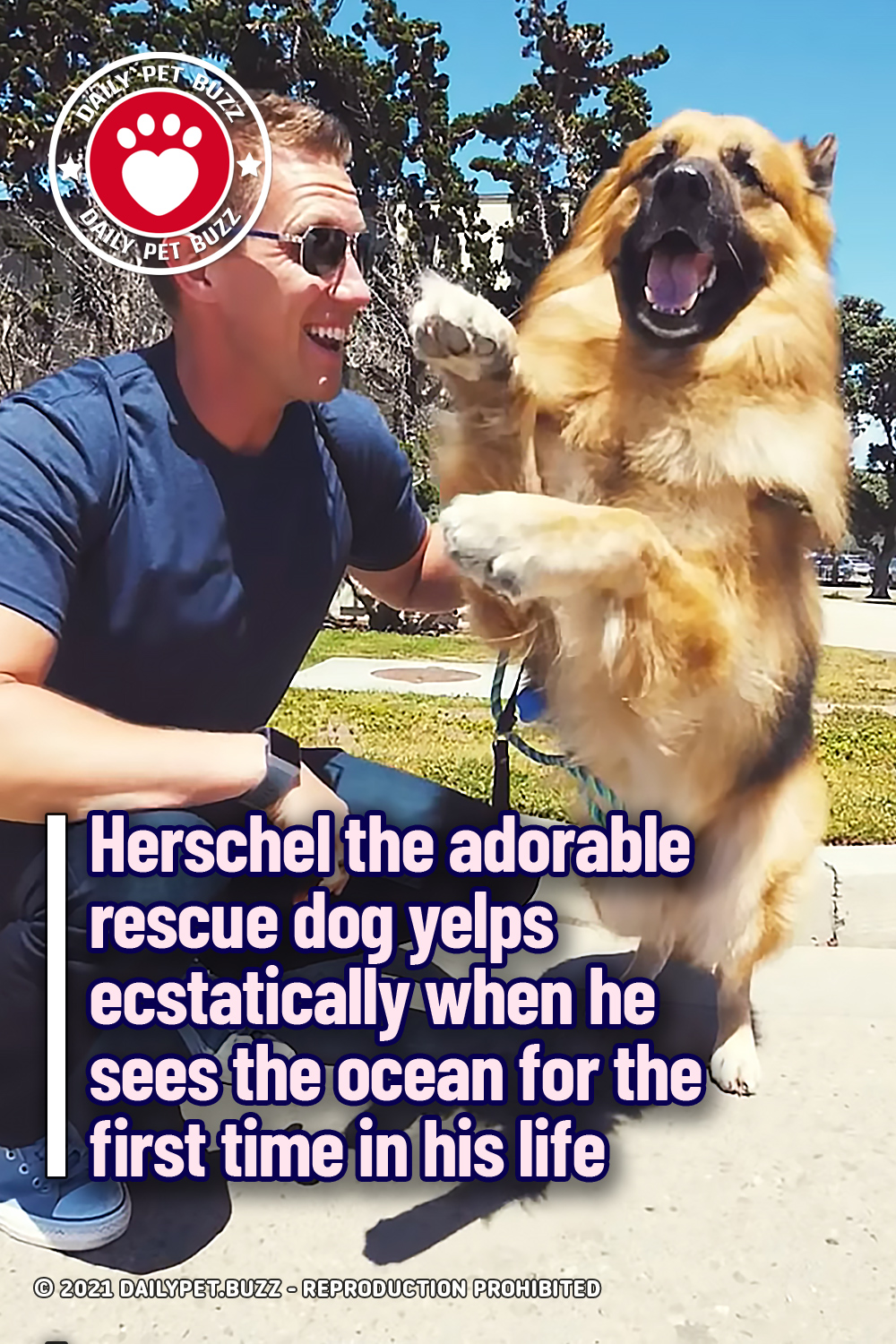 Herschel the adorable rescue dog yelps ecstatically when he sees the ocean for the first time in his life