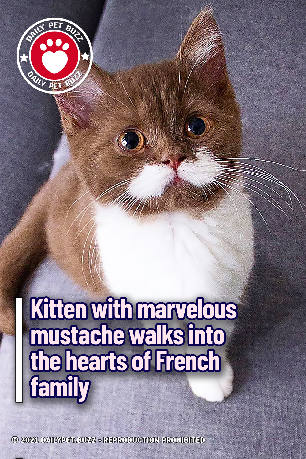 Kitten with marvelous mustache walks into the hearts of French family