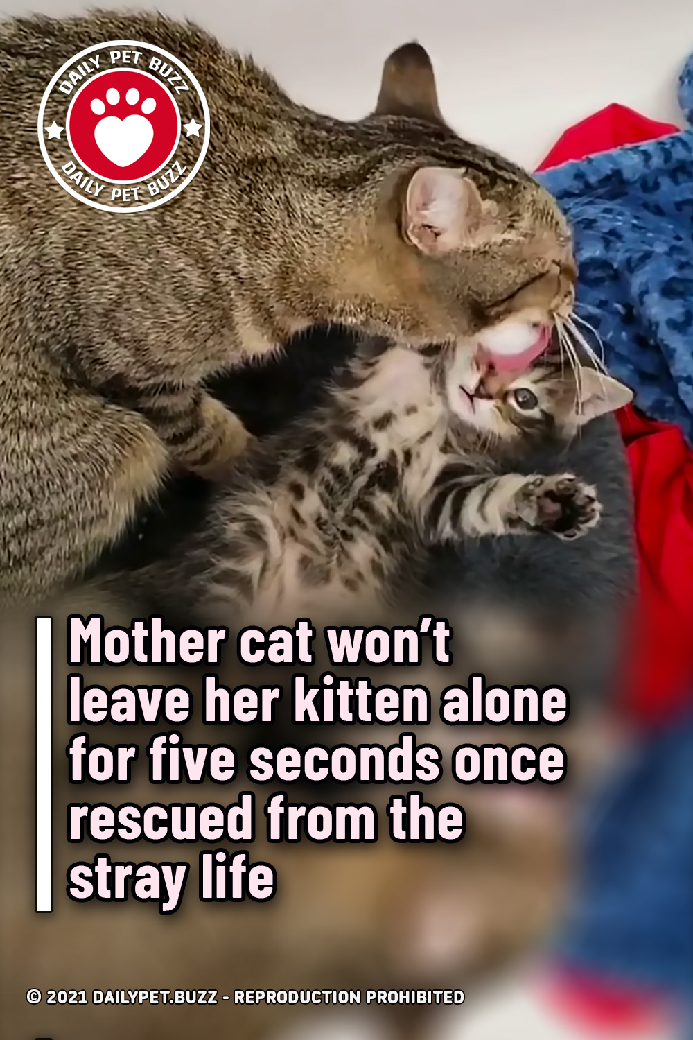 Mother cat won't leave her kitten alone for five seconds once rescued from the stray life