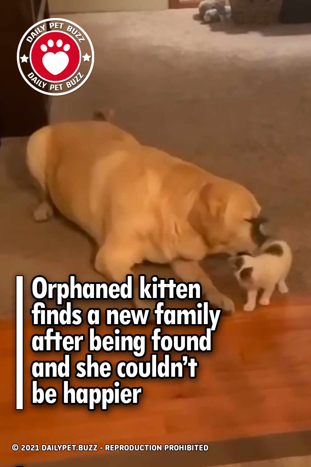 Orphaned kitten finds a new family after being found and she couldn't be happier