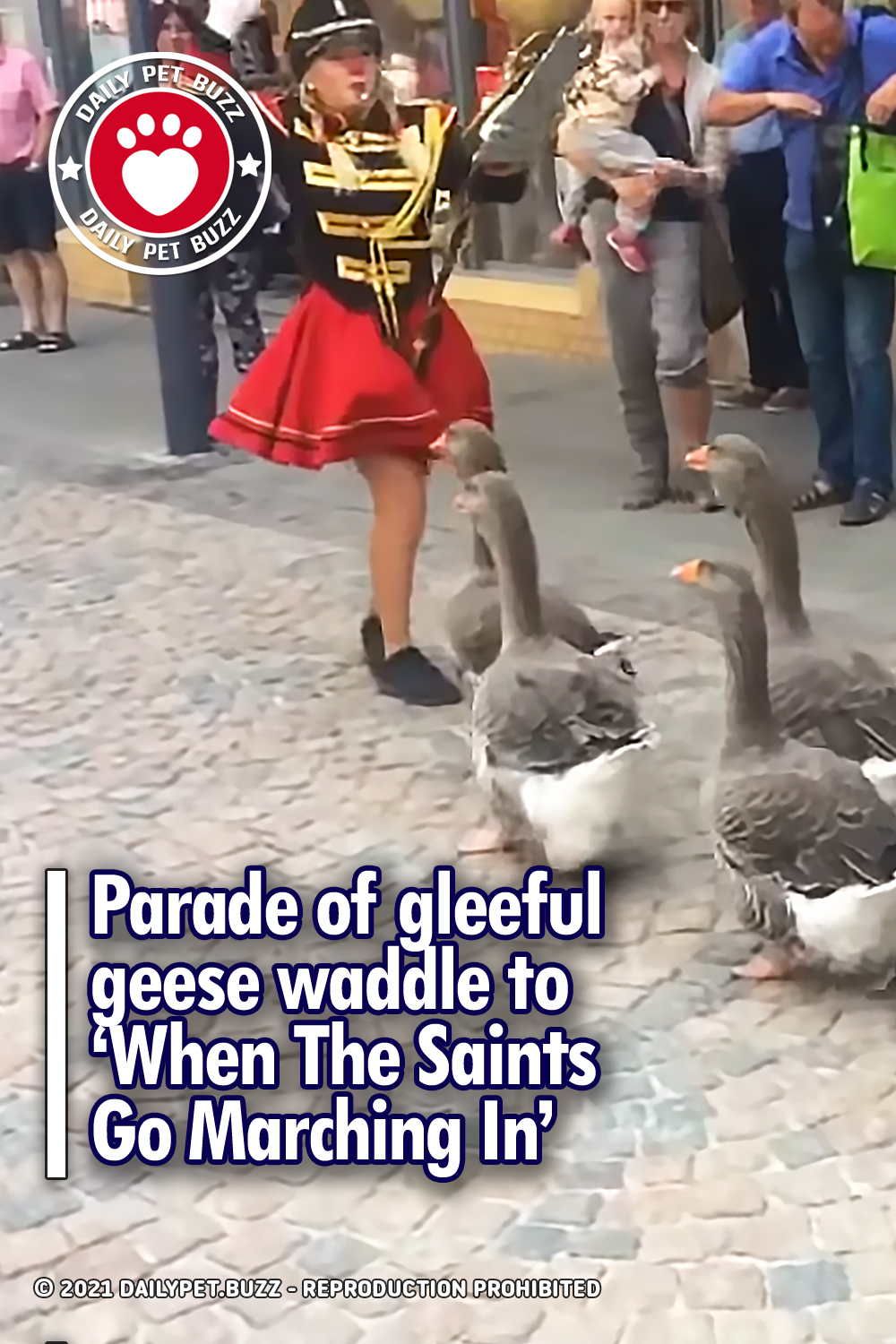 Parade of gleeful geese waddle to 'When The Saints Go Marching In'