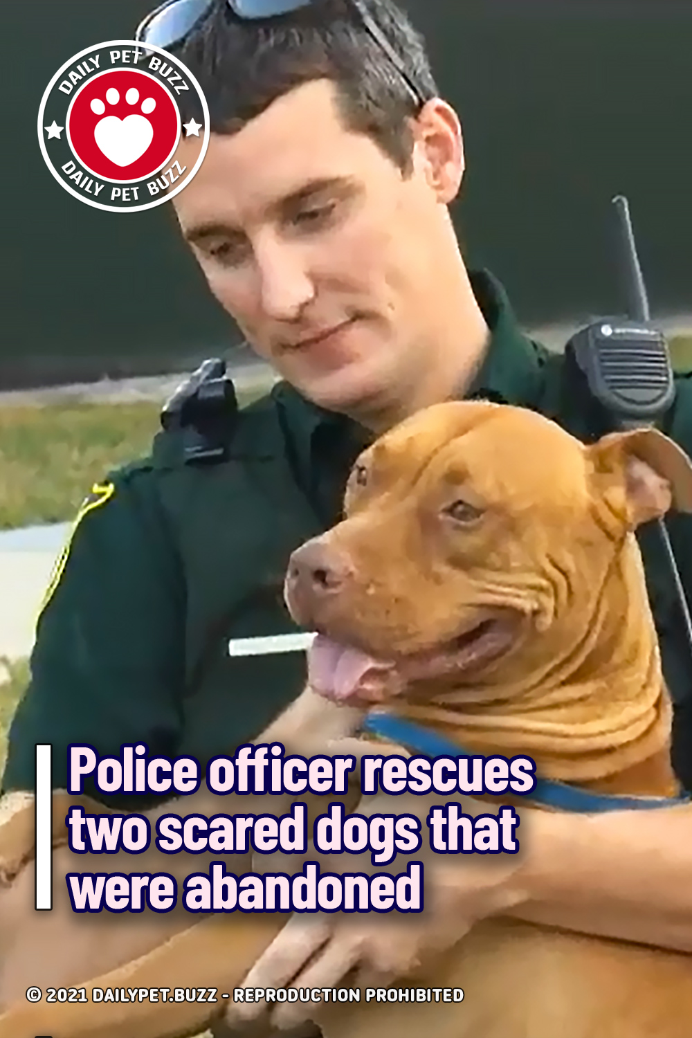 Police officer rescues two scared dogs that were abandoned