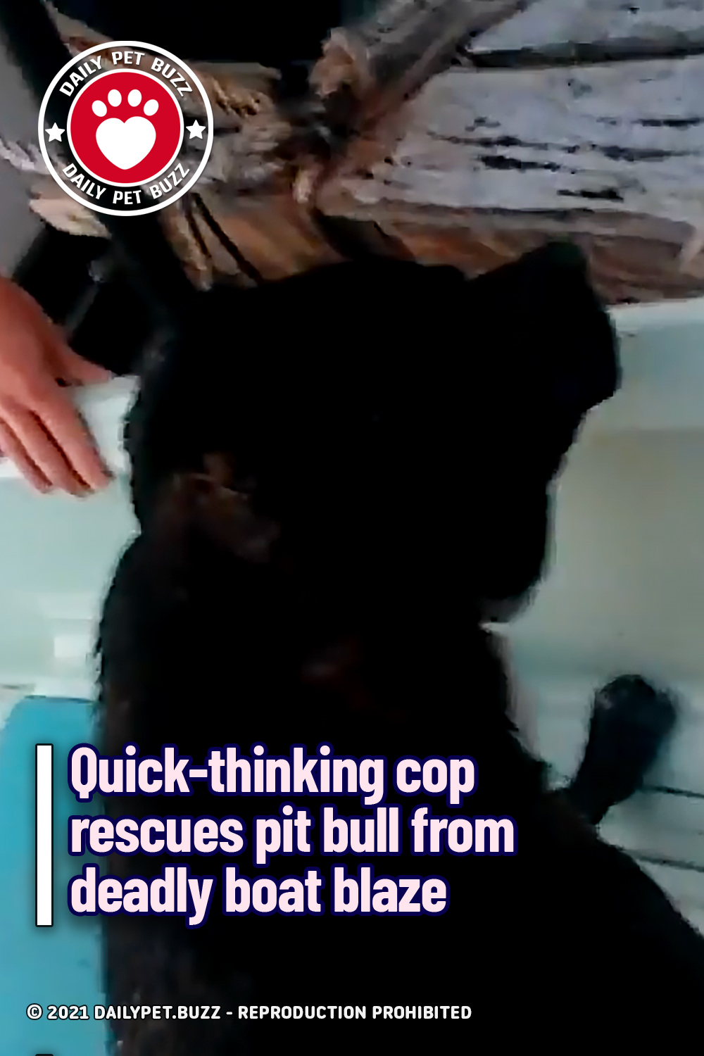 Quick-thinking cop rescues pit bull from deadly boat blaze