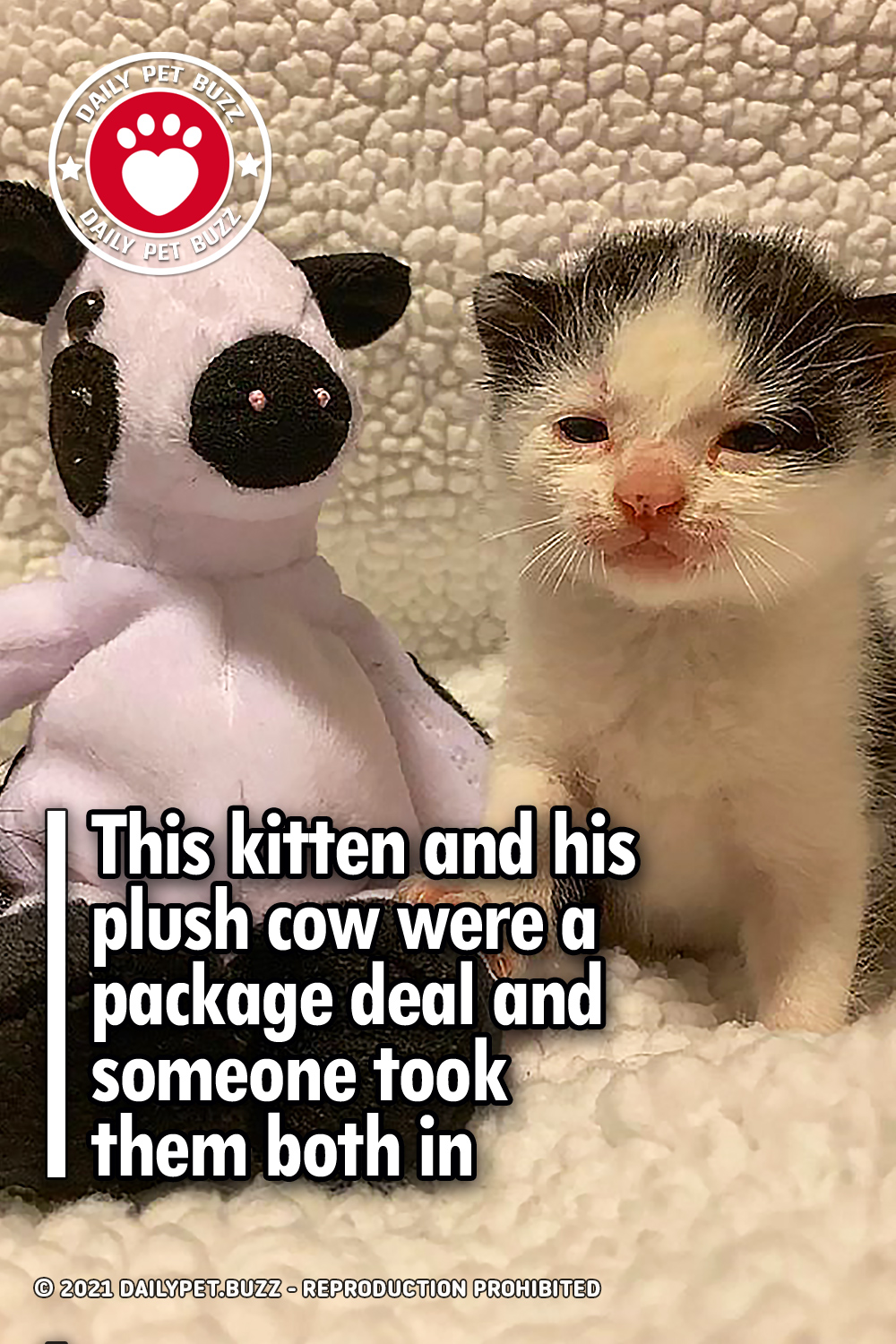 This kitten and his plush cow were a package deal and someone took them both in