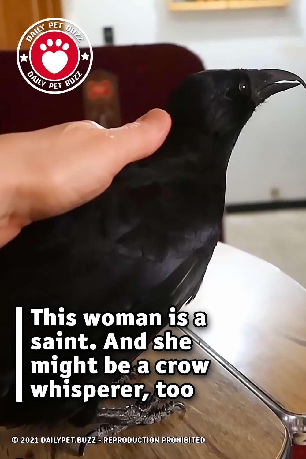 This woman is a saint. And she might be a crow whisperer, too