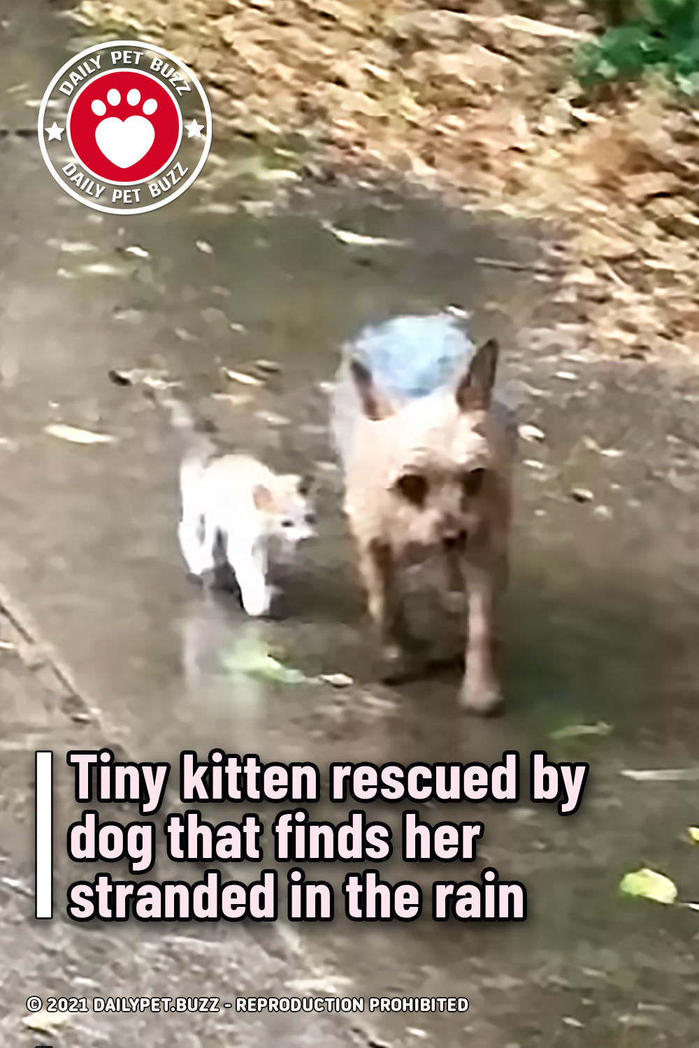 Tiny kitten rescued by dog that finds her stranded in the rain