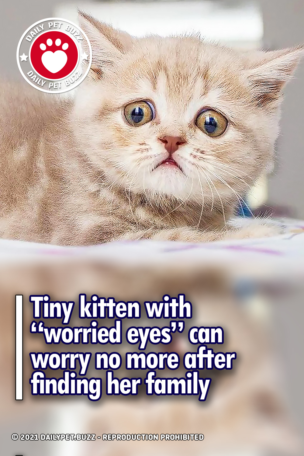 """Tiny kitten with """"worried eyes"""" can worry no more after finding her family"""