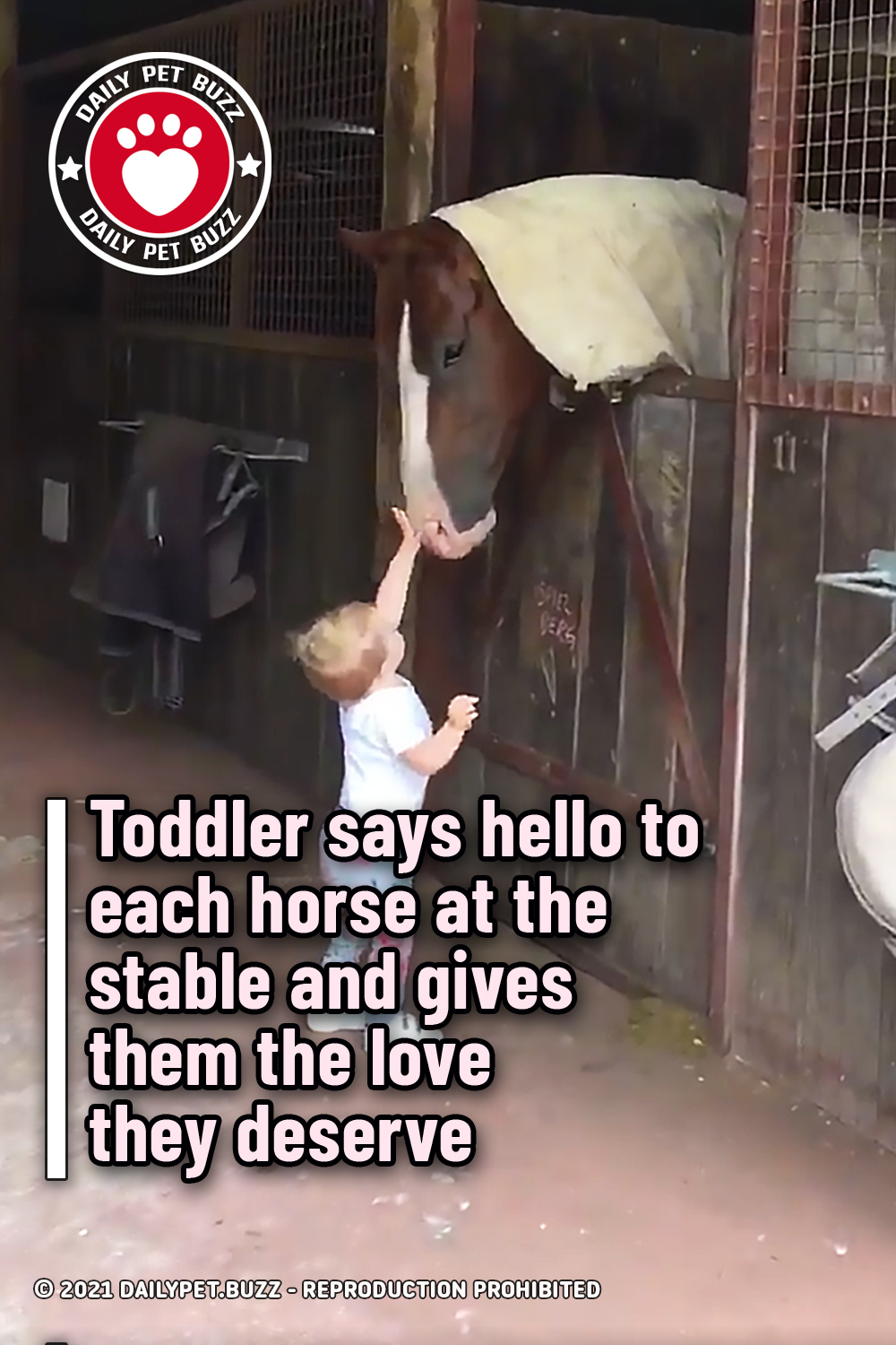 Toddler says hello to each horse at the stable and gives them the love they deserve