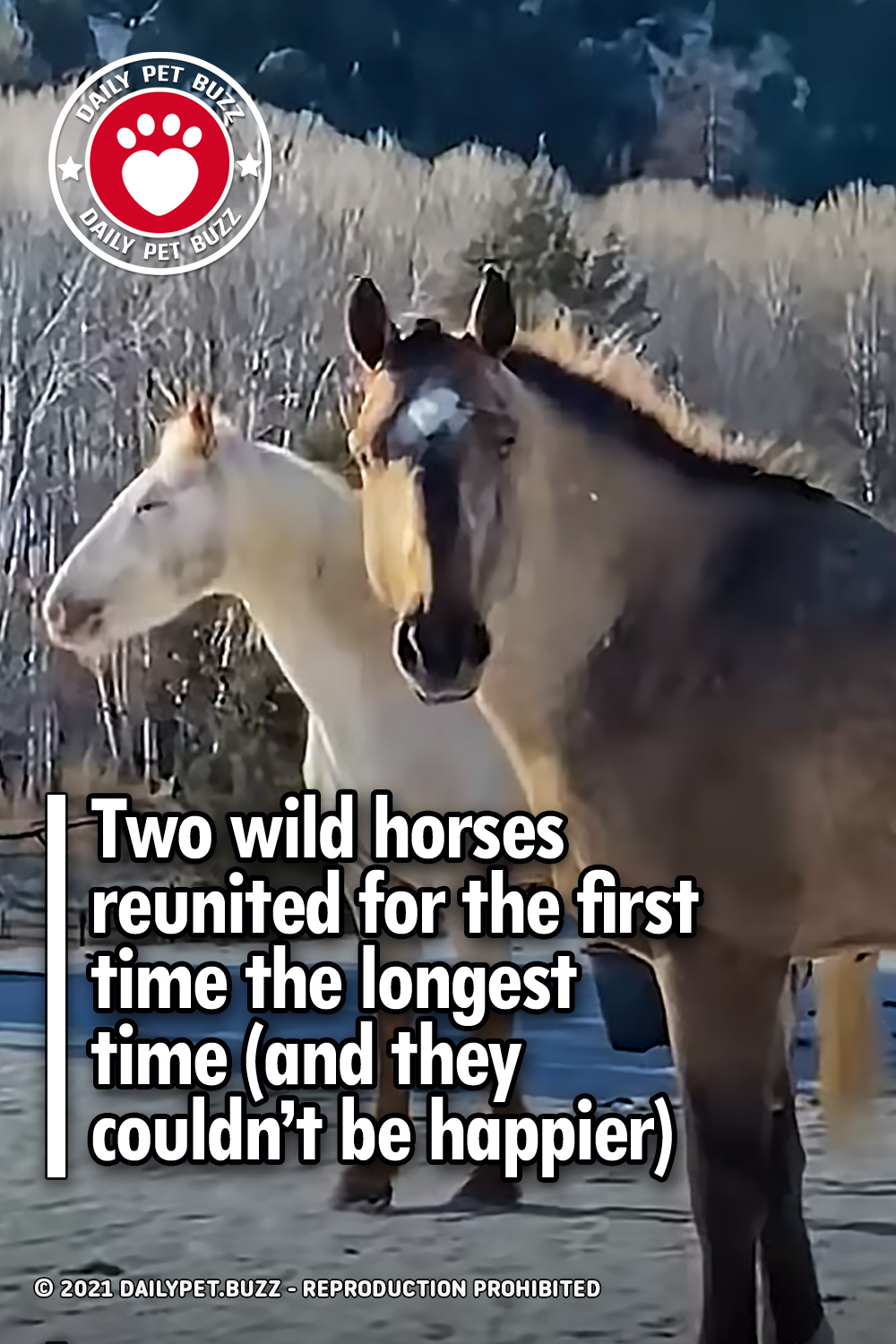 Two wild horses reunited for the first time the longest time (and they couldn't be happier)