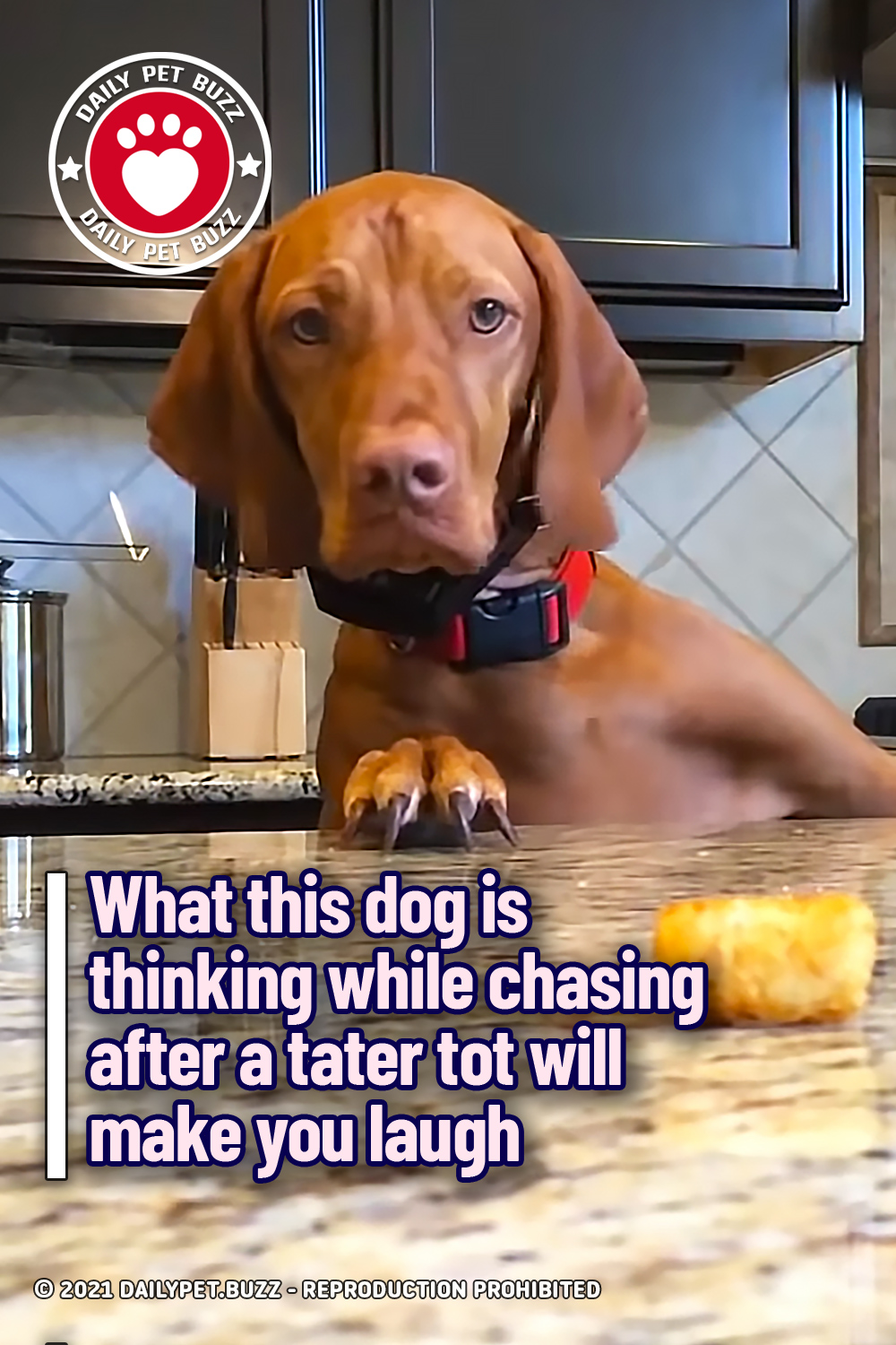 What this dog is thinking while chasing after a tater tot will make you laugh