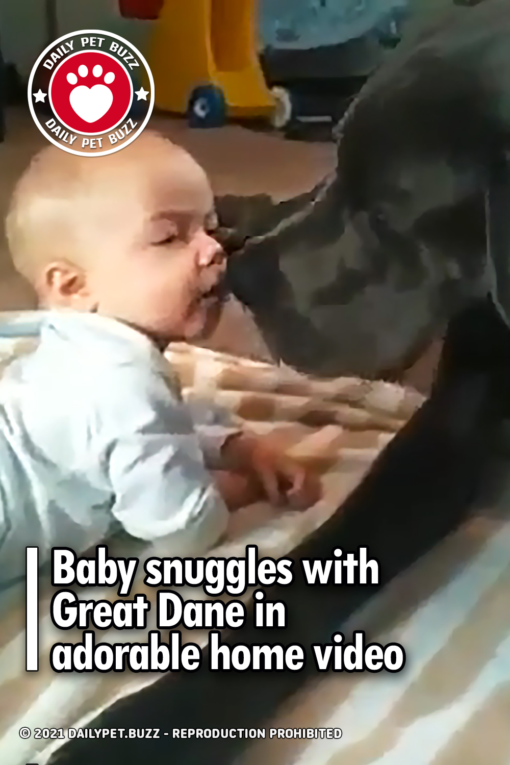 Baby snuggles with Great Dane in adorable home video