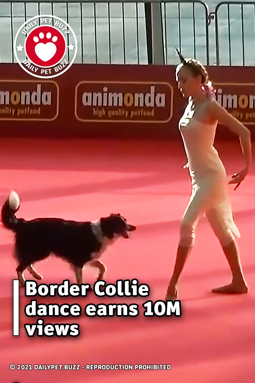 Border Collie dance earns 10M views