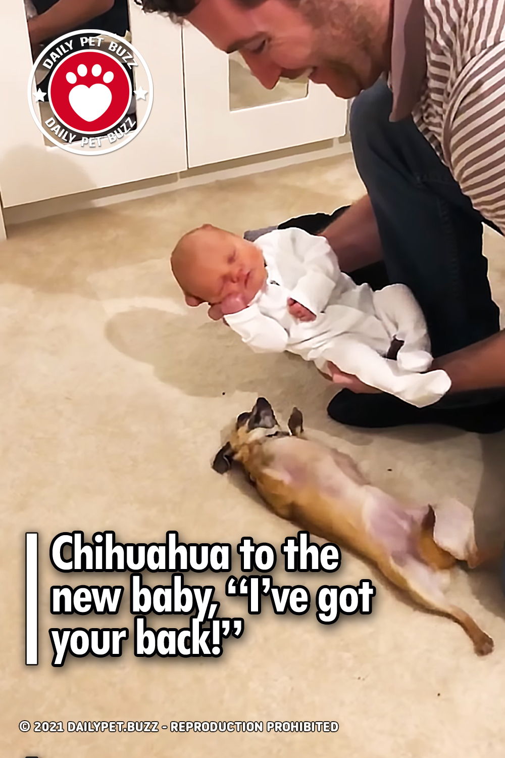 Chihuahua to the new baby, \